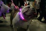 Led halsband Hond Kleur Roze