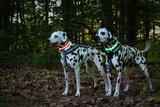 Led HondenHalsband kleur rood